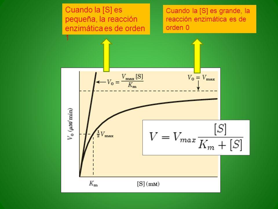 Cuando la [S] es pequeña, la reacción enzimática es de orden 1